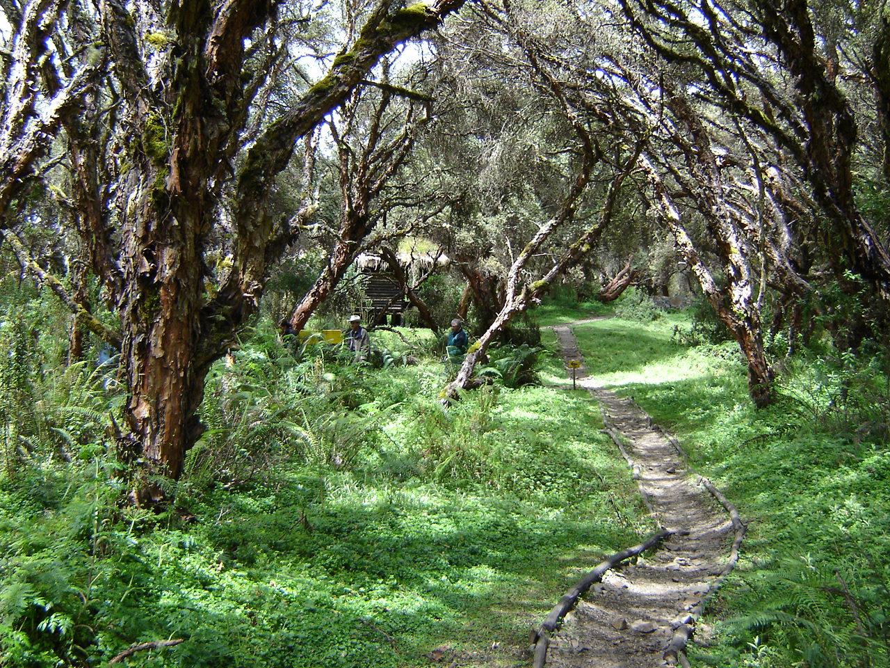 Bosque Polylepis