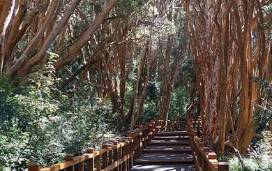 Espejo for Lo espejo 0450 el bosque